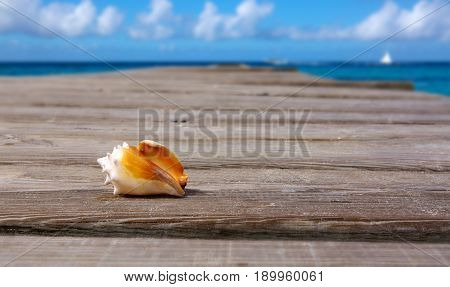 Seashell on wooden background and caribbean sea.Sommer meer Landschaft.