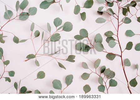 Beautiful eucalyptus branches pattern on pale pastel pink background. Flat lay top view. Lifestyle composition.