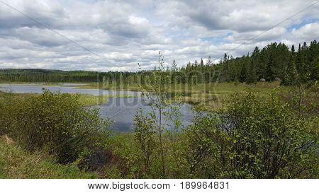 A RIVER FLOWING IN THE DEEP WOODS OF ALGONQUIN PARK CANADA
