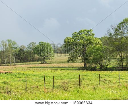 Fenced farmland and ranch pasture land with trees and blue skies are featured in this early spring photo.