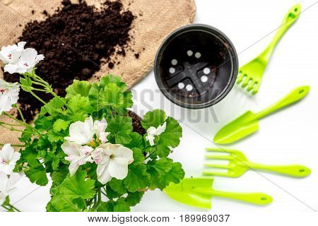 Planting flowers in garden with green instruments and ground on white desk background top view