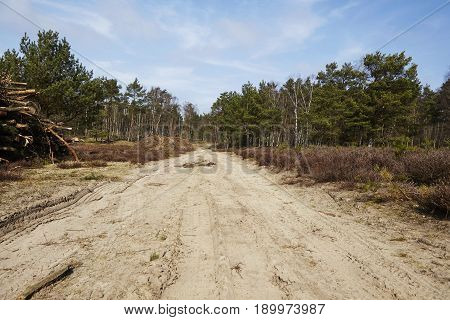 Forestry - Forest Road Into A Wood