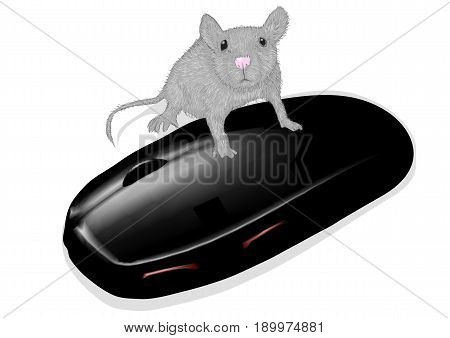 mouse and mouse on a white background