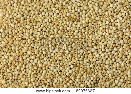 Quinoa (Chenopodium quinoa)seeds shot from above, cultivated for it's high nutritional value.