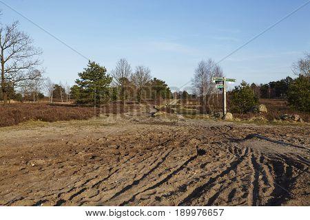 Sandy Path Leads Into A Heathland