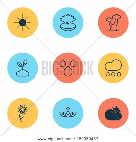 World Icons Set. Collection Of Plant, Sprout, Sunflower And Other Elements. Also Includes Symbols Such As Cloudburst, Oak, Sun.