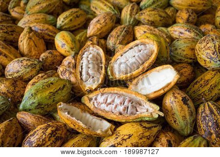 Cacao Fruit, Raw Cacao Beans, Cocoa Pod Background