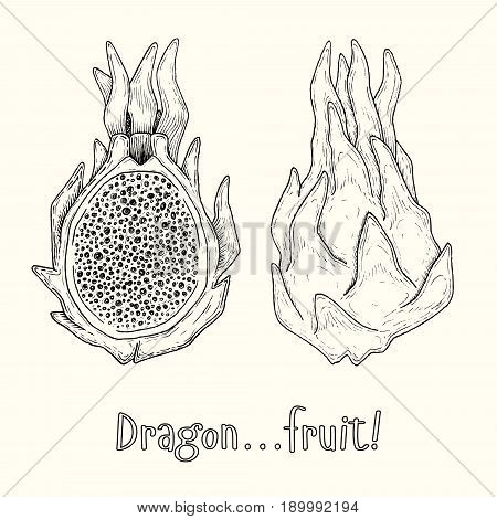 Couple of asian exotic Dragonfruits or Pitaya. Hand-drawn ink vector illustration
