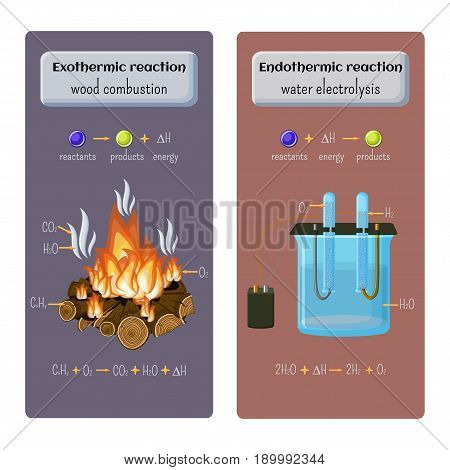 Types of chemical reaction. Exothermic - wood combustion and endothermic - water electrolysis. Educational chemistry for kids. Cartoon vector illustration in flat style.