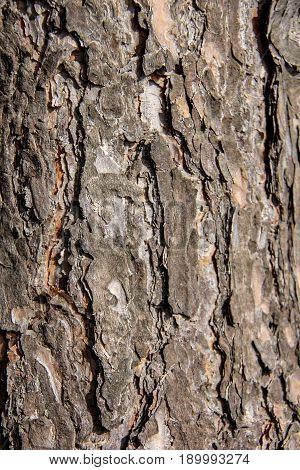oak bark texture background close up natural