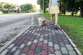 Women walking trained obedient and smart poodle dogs without needing leash poster