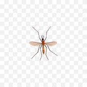 Realistic Mosquito Element. Vector Illustration Of Realistic Gnat Isolated On Clean Background. Can Be Used As Gnat, Mosquito And Alive Symbols. poster