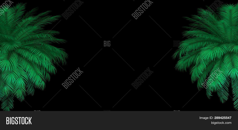 3d Render Neon Palm Image & Photo (Free Trial)   Bigstock