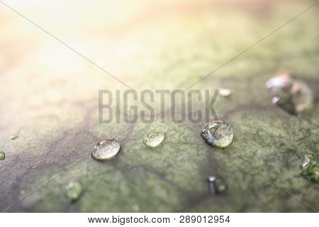 Beautiful Droplet On Green Leaf With Morning Sunlight. Droplet And Leaf Texture Background Concept.-
