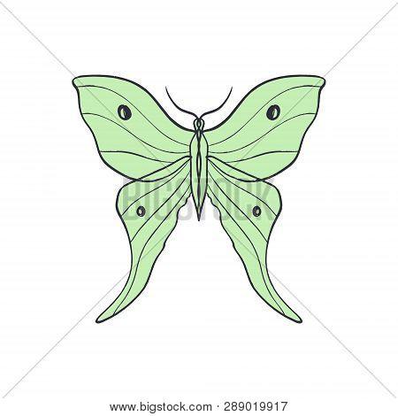 Actias Selene Butterfly, Luna Moon Moth. Hand Drawn Illustration
