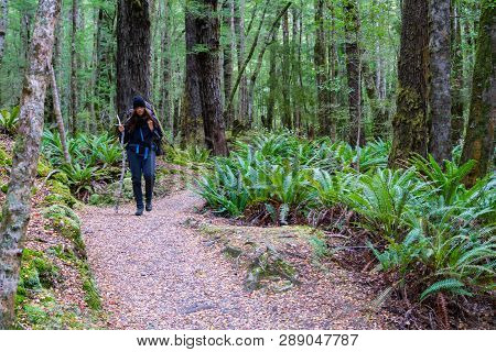 Te Anau, New Zealand - October 19 2018; Woman With Pack Tramping In New Zealand Rain Forest Off-trac