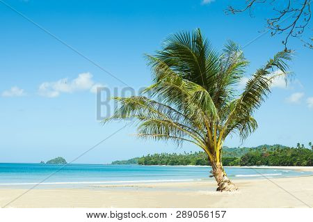 Palm Tree On An Empty Beach. Travel Vacation Concept, Background