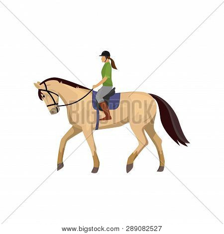 Horsewoman Riding Roan Horse Isolated Against White Background
