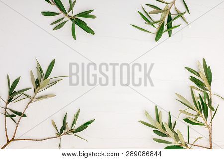 Branches And Leaves Of Olive Tree On White Background With Texture And Space To Insert Your Text Her