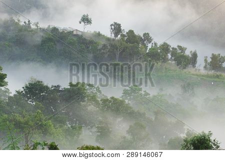 Morning Fog In Dense Tropical Rainforest, (doi-laung), Chiang-dao, Chiang Mai,thailand.