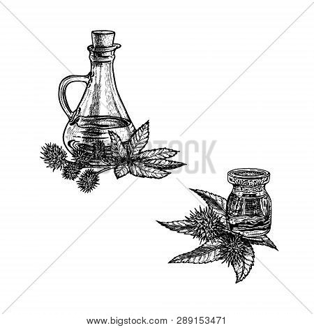 Hand Drawn Sketch Of Castor Oil. Extract Of Plant. Vector Illustration