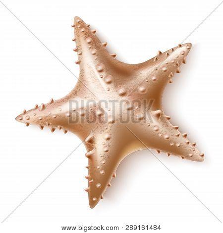 Vector Realistic 3d Starfish Sea Invertebrate A