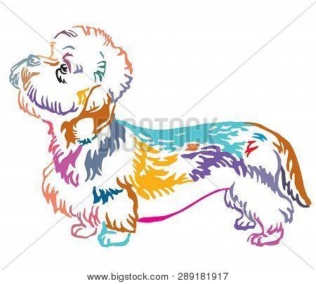 Colorful Contour Decorative Portrait Of Standing In Profile Dandie Dinmont Terrier Dog, Vector Isola