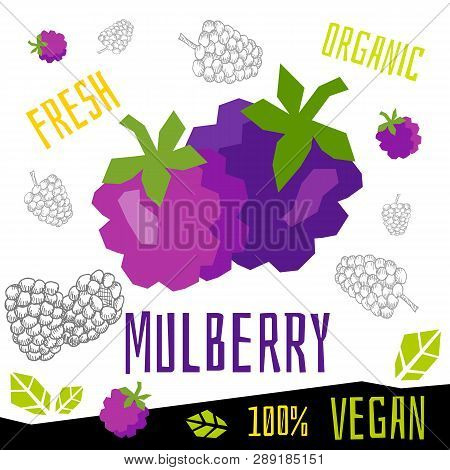 Fresh Ripe Mulberry Berry Berries Fruits Organic Vegan Food Vector Hand Drawn Illustrations