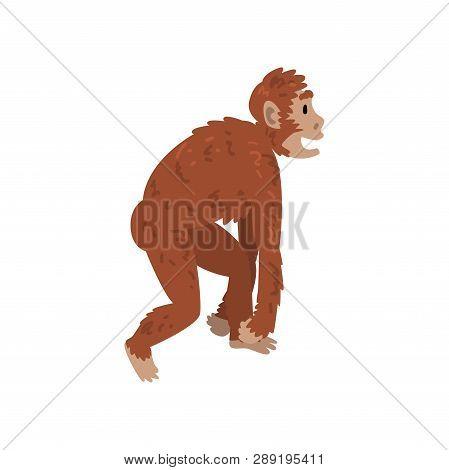 Ape Monkey, Driopitek, Biology Human Evolution Stage, Evolutionary Process Of Woman Vector Illustrat