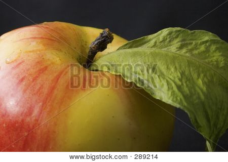 Fresh Apple With Faded Leaf