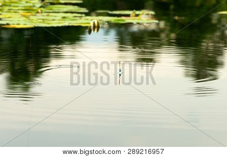 The Fishing Bobber Is In A Pond Among The Water Lily (nymphaea).