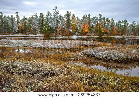 Michigan Forest Landscape. Vast Wilderness Wetlands With Fall Foliage And A Coating Of Fresh Fallen