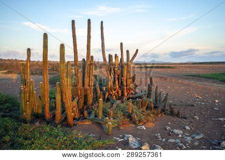 Washington Slagbaai National Park At Dawn With Morning Cactus