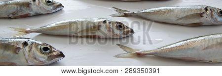 The Mediterranean Horse Mackerel On White Background (trachurus Mediterraneus), Also Known As The Bl