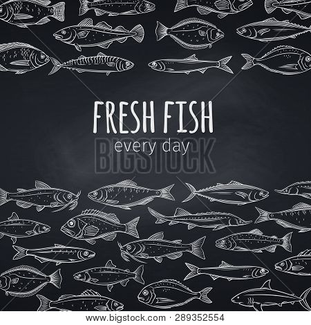 Fish Layout. Vector Page Design Seafood Design With Bream, Mackerel, Tunny Or Sterlet, Codfish And H