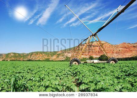 a Modern irrigation system watering a potato field on a farm