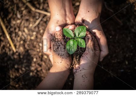 The Hands Of Adults And Children Holding Green Seedlings, Environment Earth Day In The Hands Of Tree