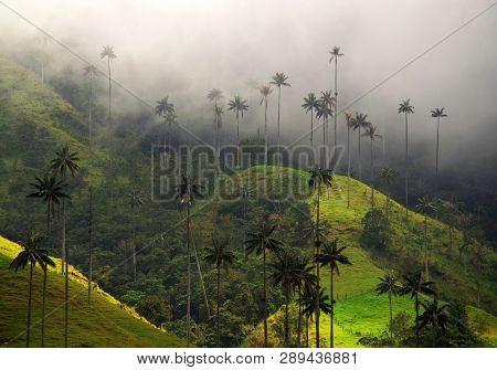 Beautiful alpine landscape of Cocora valley, Salento, Colombia, South America