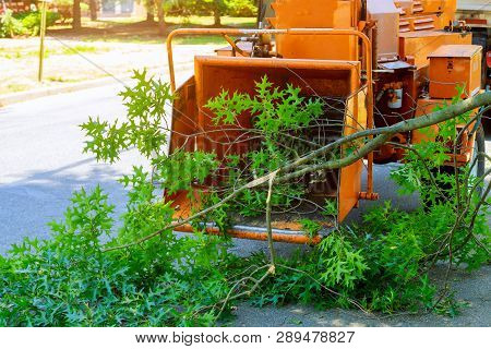 Professional Gardeners Are Putting The Branches Of A Trimmed Tree In A Wood Chipper And Pickup Truck