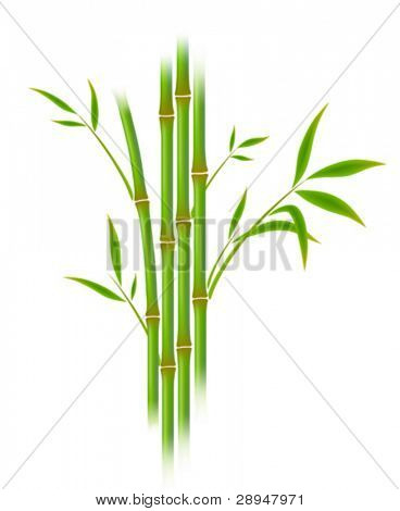 Vector illustration of bamboo. Gradient mesh.