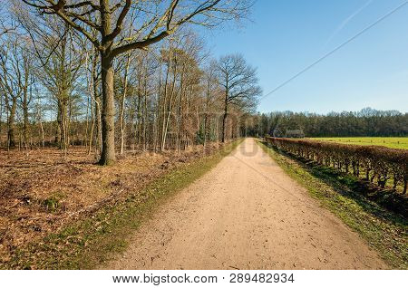 Sandy Road Along A Beech Hedge With Brown Withered Leaves On One Side And Bare Trees On The Other. T