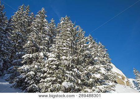 Panoramic View Down Snow Covered Valley In Alpine Mountain Range With Conifer Pine Trees