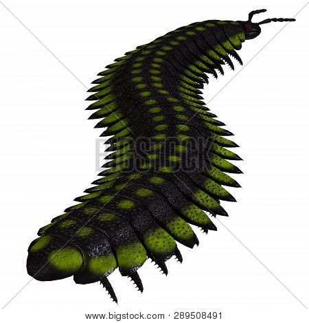 Arthropleura Invertebrate Tail 3d Illustration - Arthropleura Was A Carnivorous Centipede Insect Tha