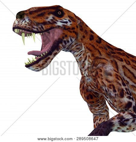 Lycaenops Cat Head 3d Illustration - Lycaenops Was A Carnivorous Cat-like Dinosaur That Lived In Sou