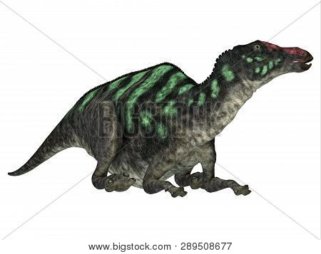 Maiasaurus Dinosaur Head 3d Illustration - Maiasaurus Was A Large Herbivorous Dinosaur That Lived In