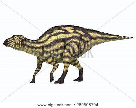 Maiasaurus Dinosaur Young Juvenile 3d Illustration - Maiasaurus Young Juvenile Was A Herbivorous Din