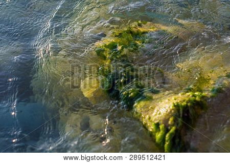 Stones With Green Algae In Clear Sea Water