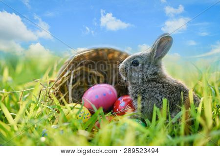 Easter Bunny And Easter Eggs On Green Grass Outdoor / Little Gray Rabbit Sitting With Basket Nest An
