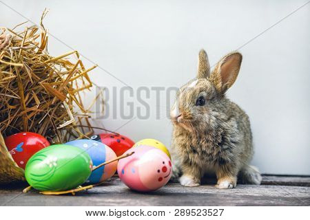 Easter Bunny And Easter Eggs On Gray Background / Colorful Eggs And Little Rabbit Sitting On Wooden