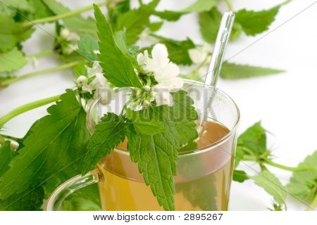 Close up of a stinging nettle tea on bright background poster